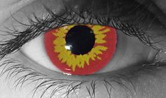 Red Wolf Contacts (novelty lenses) - Red Wolf Contact Lenses by Novelty Mfg