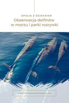 APULIA Z DZIECKIEM - obserwacja delfinów w morzu i parki rozrywki Whale Watching, Track, Italy, Movie Posters, Movies, Italia, Runway, Films, Film Poster