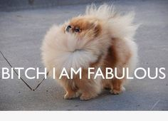 This dog is really fabulous!