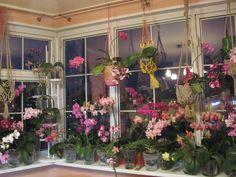 Как выращивать орхидею в стекляной вазе с керамзитом - Поиск в Google