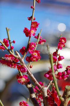 1/21 マフラーをモコモコに巻いて会社を出たら、数日前までの刺すような寒さはなく、冬の空気に交じって、ほんのりと春の香りを感じた。大人になってよかったと思うのは、季節の移ろいを心で味わうことができる時。幸せな一瞬。