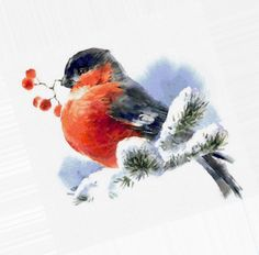 Diy Postcard, Bullfinch, Rangoli Designs, Christmas Pictures, Bird Art, Nature Pictures, Painting Inspiration, Photo Wall, Sketches