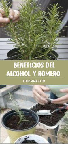 Health Benefits, Health Tips, Garden Soil, Healing Herbs, Flower Mandala, Natural Remedies, Natural Beauty, Healthy Lifestyle, Beauty Hacks