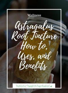 Astragalus Root Tincture – How to, Uses, and Benefits - Holistic Health Herbalist
