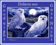 Good Night, Owl, Bird, Animals, Google, Nighty Night, Animales, Animaux, Owls
