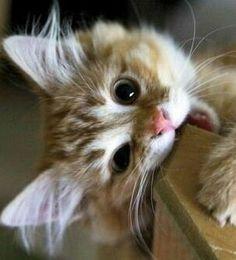 I'm hungry, please wake up.