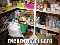 miaucoles_encuentra_el_gato_1