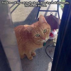 I don't know this cat!