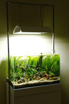 370 best aquariums aquascaping images on pinterest in 2018