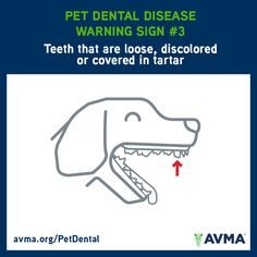 Teeth that are loose, discolored or covered in tartar are a warning sign of possible dental disease in pets. For information about pet dental health and the importance of preventive care, visit avma.org/PetDental.
