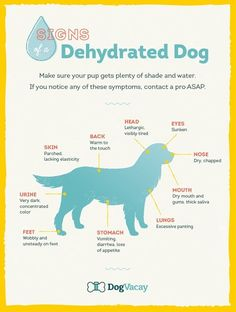 Signs Of a Dehydrated Dog