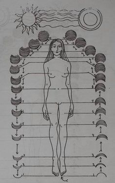 Anatomy Occult: The Moon moves woman ~ she cycles through the sacred her entire life long….