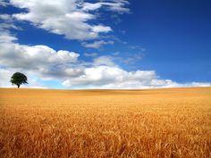 Ready to reap! by Anthony Thomas [aka wabberjocky], via Flickr