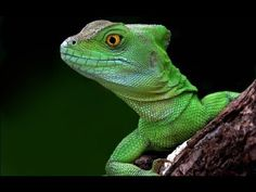 Dragons Alive: 1/3 - Ruling Reptiles (BBC Nature Documentary) *WARNING GRAPHIC NATURAL VIOLENCE.