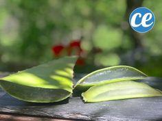 Voici Comment Couper Et Utiliser Le Gel D'une Feuille d'Aloe Vera. Feuille Aloe Vera, Gel Aloe, Danger, Attention, Voici, Plants, Planting Seeds, Homemade Face Masks, Homemade Beauty Products