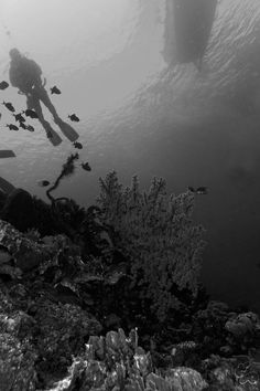 A dramatic view of the Sombu divespot, a favorite diving area within Wakatobi National marine Park.
