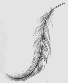Maybe an idea for the background... Feather Tattoo Designs