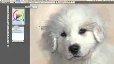 Award-winning artist Heather Michelle shows how to turn a simple snapshot of any animal into a sellable, polished work of art using Corel® Painter™. Digital Painting Tutorials, Acrylic Painting Tutorials, Digital Art Tutorial, Art Tutorials, Digital Paintings, Painting Fur, Painting & Drawing, Wildlife Paintings, Animal Paintings