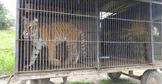 Denuncia todos los casos de circos con animales no los permitan más! FIRMA Y COMPARTE ESTA...