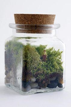 Plantas: Terrarios