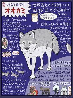 Animals And Pets, Cute Animals, Japanese Animals, Kemono Friends, Werewolf, Dog Love, Mammals, Dog Cat, Geek Stuff