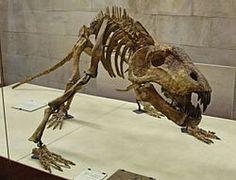 Skeleton ofTitanophoneus potens, a carnivorous dinocephalian of the Middle Permian.