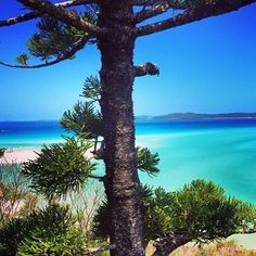 #HIRememberWhen #HamiltonIsland  wish i was still there . #best #peaceful #beautiful #place on #earth #australia #competition http://blog.fmcarsrl.com/wp-content/uploads/2016/11/15046919_1803142259960922_7001967698133385216_n.jpg http://blog.fmcarsrl.com/index.php/2016/11/17/hirememberwhen-hamiltonisland-wish-i-was-still-there-best-peaceful-beautiful-place-on-earth-australia-competition-3/