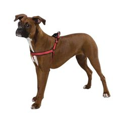 Zack  Zoey Nylon Reflective Cushion Dog Harness 1321Inch Red * Want additional info? Click on the image.(This is an Amazon affiliate link and I receive a commission for the sales)