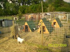 goat village. This would be cool with like two that they can climb