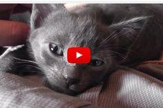 Cute Kittens Run Their Purr Motors - Love Meow