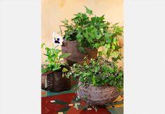 Panela de ferro transformada em cachepô para plantas de pequeno porte