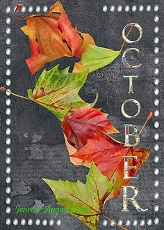 October - my birth month Seasons Of The Year, Months In A Year, 12 Months, Autumn Day, Autumn Leaves, Autumn 2017, Hello October, October Born, October Fall