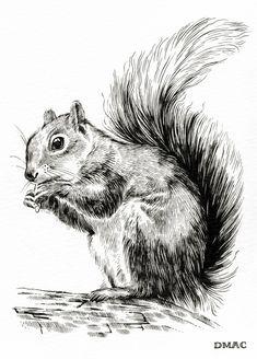squirrel1.jpg (538×750)