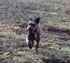 Mud, makes my feet wet!  November 7, 2015