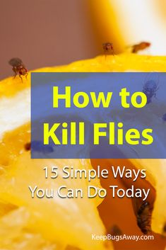 Don't know how to kill flies effectively? Try these top 15 easy ways to kill flies we listed in this post now to get rid of them for good. Keep Flies Away, Get Rid Of Flies, Keep Bugs Away, Get Rid Of Ants, What Kills Flies, Killing Flies, Household Bugs, Flies Outside, What To Use