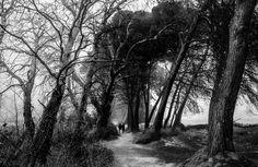 Passage into the fog - https://javierlongasvalienphotography.wordpress.com/
