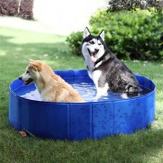 PAWZ Road Dog Swimming Pool Foldable Pet Bath Tub for Dogs and other Animals *** Wonderful of your presence to have dropped by to visit our image. (This is an affiliate link) Baby Pool, Kid Pool, Pet Dogs, Dog Cat, Pets, Husky Malamute, Dog Bath Tub, Le Husky, Dog Swimming Pools