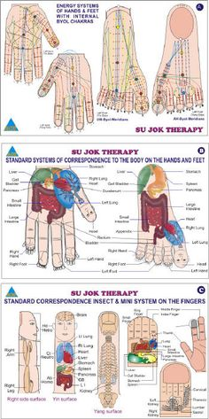 Why SUJOK ?  - The Sujok is a targeted and deep energy work. Treatment on the time involved in the elimination of the source of disturbance.   - The effect is often felt within minutes or even seconds.    - Any part of the body can be treated: organ, system or joint.    - Natural and gentle technique, the Sujok is without side effects................