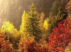 Foliage in Valle d'Aosta | Valle d'Aosta