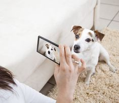 Getting your pet to perform for the perfect video isn't always easy. Our expert videographer offers her tips for capturing the best possible videos.