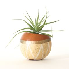 Air Plant Planter with Air Plant -  Natural, Tan, Gold, White. by ThriftedandMade on Etsy https://www.etsy.com/listing/165514367/air-plant-planter-with-air-plant-natural