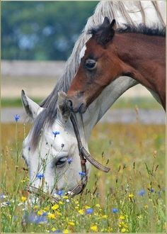 Mare and foal grazing in the pasture.