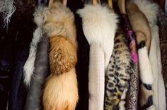 """""""I live for fur, I worship fur"""""""
