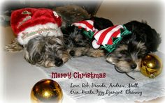 Scrap Happy With Brenda Merry Christmas Love, Funny Dogs, Scrap, Puppies, Happy, Animals, Cubs, Animales, Happy Merry Christmas