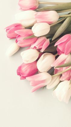 Tulip wallpaper & tulpe-tapete & papier peint tulipe & papel t… Frühling Wallpaper, Flower Phone Wallpaper, Spring Wallpaper, Wallpaper Ideas, Growing Tulips, Planting Tulips, Tulips Garden, Tulip Drawing, Tulip Painting