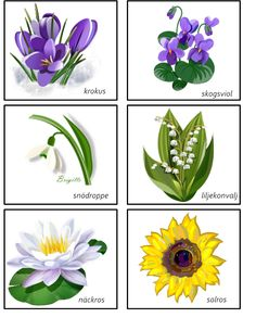 montessorimaterial - Pretty Flower Names, Pretty Flowers, Learn Swedish, Swedish Language, Floral Arch, Montessori Materials, Science Lessons, Spring Crafts, Science And Nature