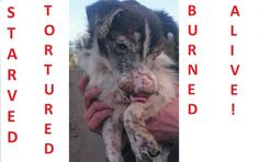 Tina, as she was named by the staff from the shelter, had horrific facial injuries and scabs all over her body. Her nose and ears have been badly damaged and sh...