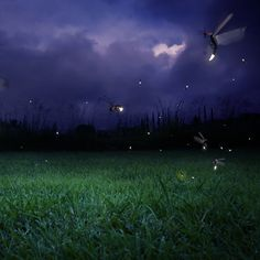 Fireflies: The Twinkle in Nature's Eye - Nature and Environment - MOTHER EARTH NEWS