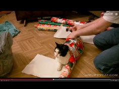 How to Wrap a Cat for Christmas | Best New Music, Apps, and Videos for the Week of December 16, 2013 | Everywhere