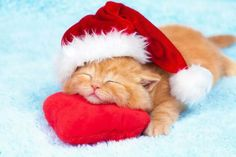 He might sleep through the holidays! #kittens #pets #christmas facebook.com/sodoggonefunny